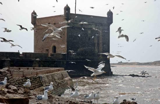 دولة المغرب في الماضي والحاضر oiseau-fortification