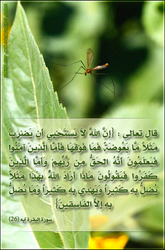 ������ ����� ������ ������ ����� namlah-b3o'9ah-1.jpg