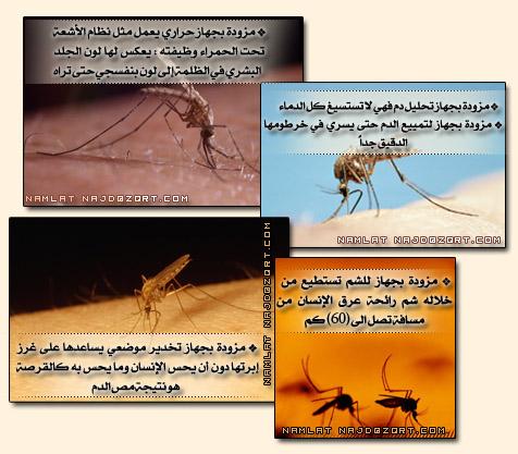 بالصور معجزة قرانية اثبتها العلم الحديث للأية 26 من سورة البقرة namlah-b3o'9ah-3.jpg