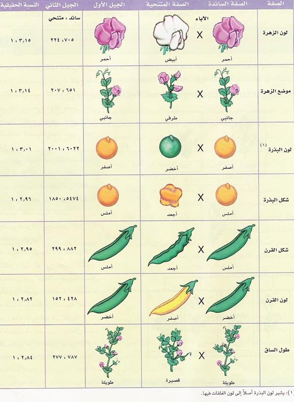 الصفات التي استخدمها مندل دراسته لنبات البازيلاء