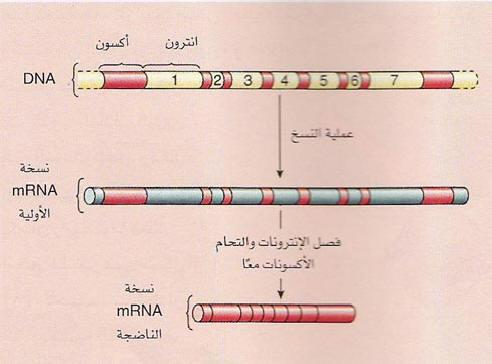 السلسلة التعليمية في علم الأحياء Shape27