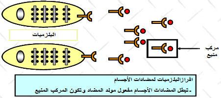 الاستجابة المناعية النوعية ذات وسيط خلطي BLEXU.jpg