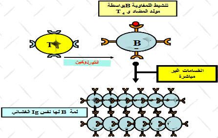 الاستجابة المناعية النوعية ذات وسيط خلطي BLMULTIP.jpg