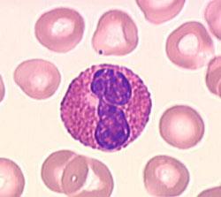 المناعة غير النوعية أو الطبيعية polynuc2-s.jpg