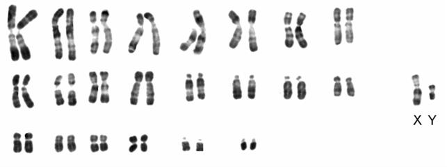 الوراثة البشرية CRIDECHAT.png