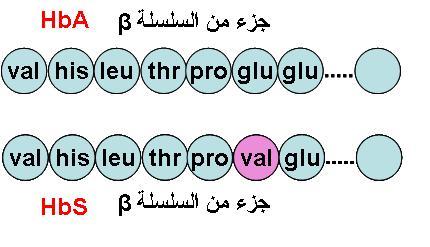 شرح بسيط و سهل للنمط الظاهري من خلال مثال فقر الدم المنجلي HbSHbA.JPG