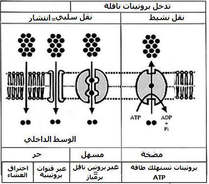 الية امتصاص الماء و الاملاح المعدنية عند النباتات Conclphotos3