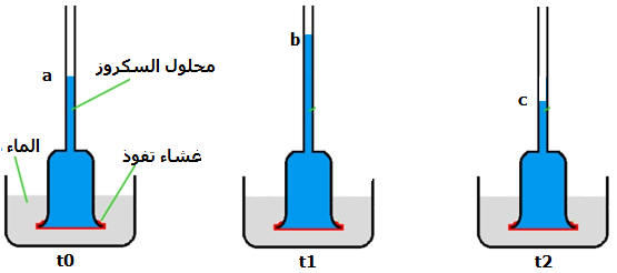 الية امتصاص الماء و الاملاح المعدنية عند النباتات Photos11