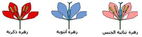 التوالد الجنسي عند النباتات الزهرية Plantr2