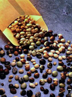Soybean soya2.jpg