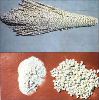 هل هناك أدوية عشبية لعلاج مشاكل الحيض؟